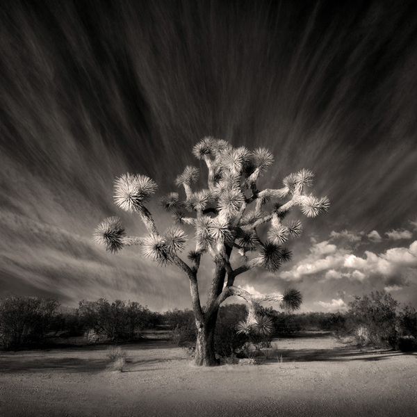 Joshua Tree Parkway, Arizona