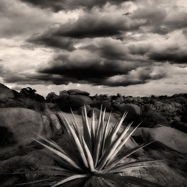 Agave, Texas Canyon, Arizona